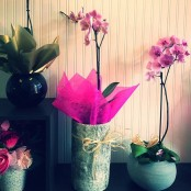 Orchid Plants in a decorative pot